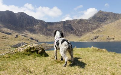 Dog-Friendly Wales – Spoilt for Choice